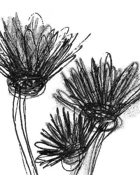 fiori neri r1