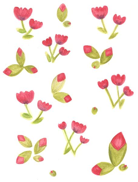 poppy1scanrid